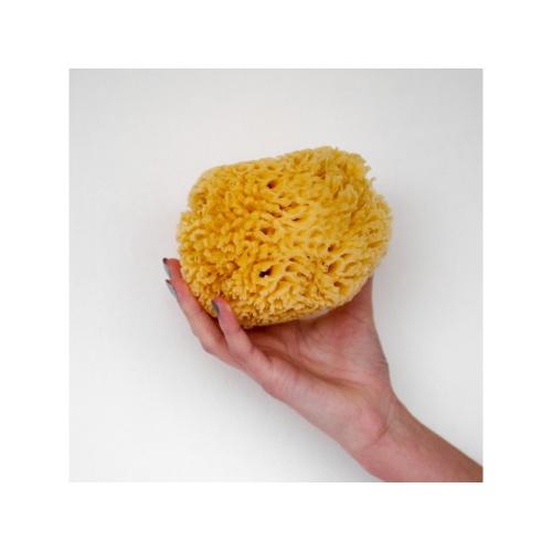 Förster´s přírodní mycí mořská houba Karibská - L